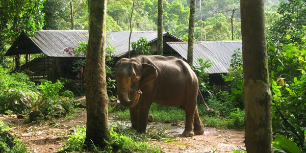 elephant trekking things to do on Koh Chang