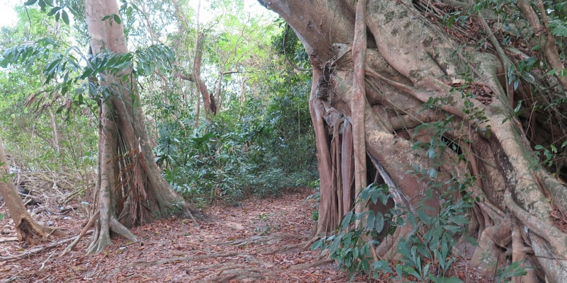 koh-mak-trails-bicycle-paths-activities